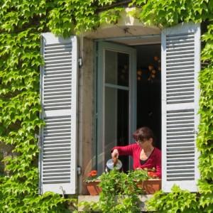 ivy_window